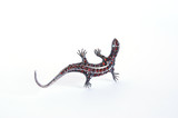 Jewelery - lizard figurine made of metal with natural grenades poster