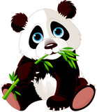 Fototapety Panda eating bamboo