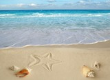 sea shells starfish tropical sand turquoise caribbean poster