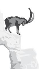 Alpine Ibex - Capra ibex ibex