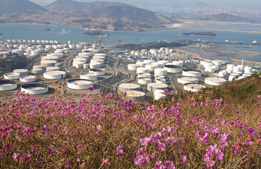 Chemical plant surrounded by flowers