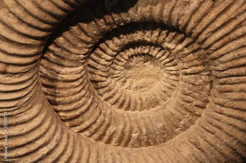 Leinwandbild Motiv Fossil: Ammonit
