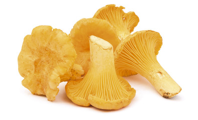 Group_of_chanterelles