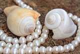 Refined background with pearls and sea cockleshells poster