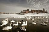 Fototapeta europa - zima - Zamek