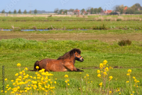 Horse in meadows