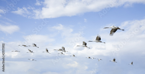 Fototapeten,tier,schwarm,vögel,blau