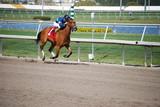 Florida Bred Racehorse poster