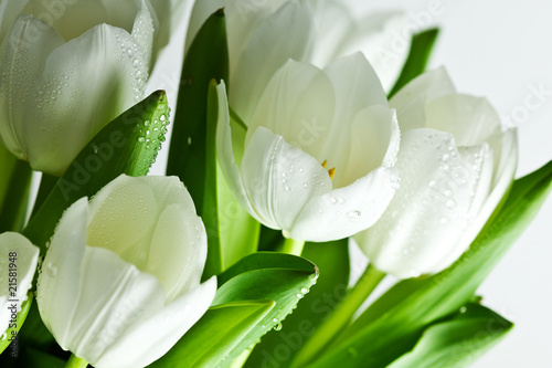 Foto op Canvas Tulp White Tulips