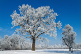 Landscape with hoarfrost, frost and snow on tree in winter