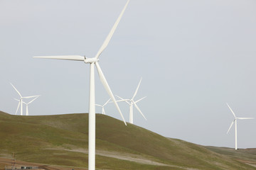 wind farm to harness the wind for renewable energy