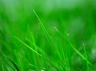 Background of freshly grass, shallow depth of field.