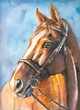 Brown horse watercolor painted.
