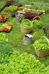 the watering can and baskets in the garden on grass