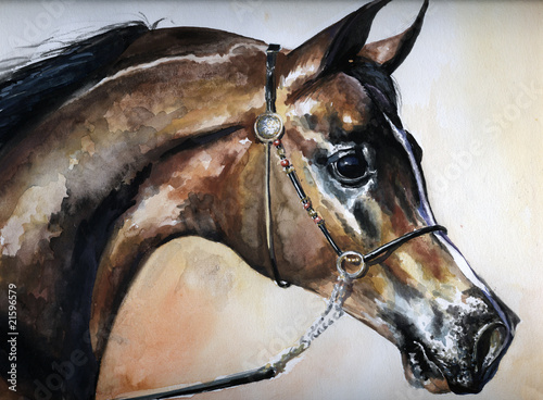 Arabian horse watercolor painted