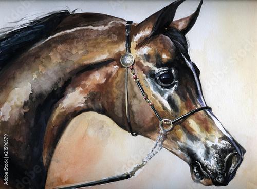 Arabian horse watercolor painted