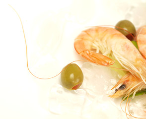 Macro shot of prawn