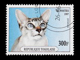 Togo mail stamp featuring a pedigree Javanese cat poster