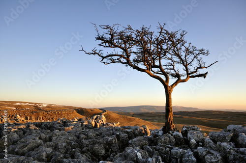 lone tree on hill at sunset