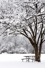 snow gently falls on picnic bench in foreset preserve