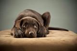 Puppy on ottoman poster