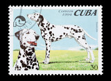 Cuban mail stamp featuring pedigree dalmatian dogs poster