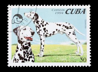 Cuban mail stamp featuring pedigree dalmatian dogs