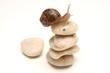 Escargot au sommet - 21618710