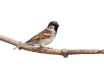 profile of a sparrow perched on a branch with a sunflower seed i