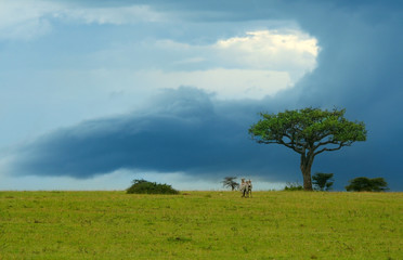 Beauty of Africa landscape