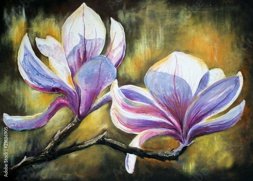 Magnolia grafika