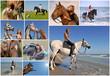 équitation de loisir