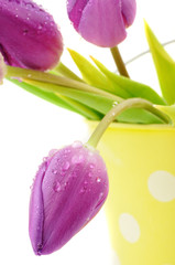 Tulips in a Spotted Bucket