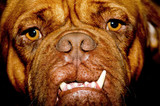 Ugly dog face poster