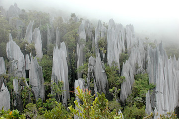 Pinnacles in Gunung Mulu National Park, Borneo, Malaysia.
