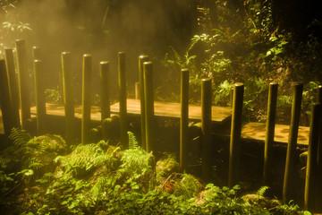 Boardwalk in a mist forest