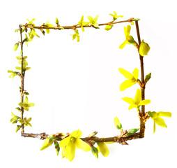 spring frame from forsythia flowers