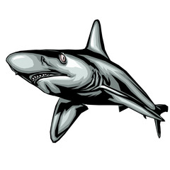 requin, illustration