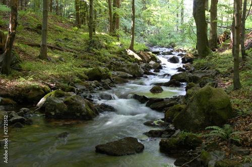 Waldimpression im Vessertal, Thüringen - 21721512