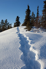 Snowshoe tracks in winter wonderland