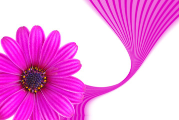 pink blume