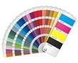 Color fantail vector