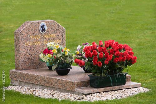 cimetière animalier - 21757590