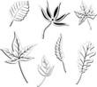 Blätter, Laub, Herbst, filigran, floral, leafes, autumn