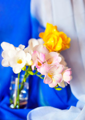 spring freesias in the soft focus