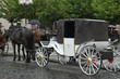 White Carriage