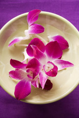 Purple orchids in bowl of water
