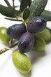 Olive sprigs with green and black olives (close-up)