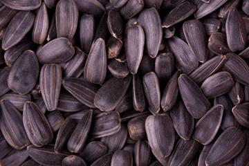 Closeup of sunflower kernels