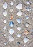 Sea shells spread on the sand